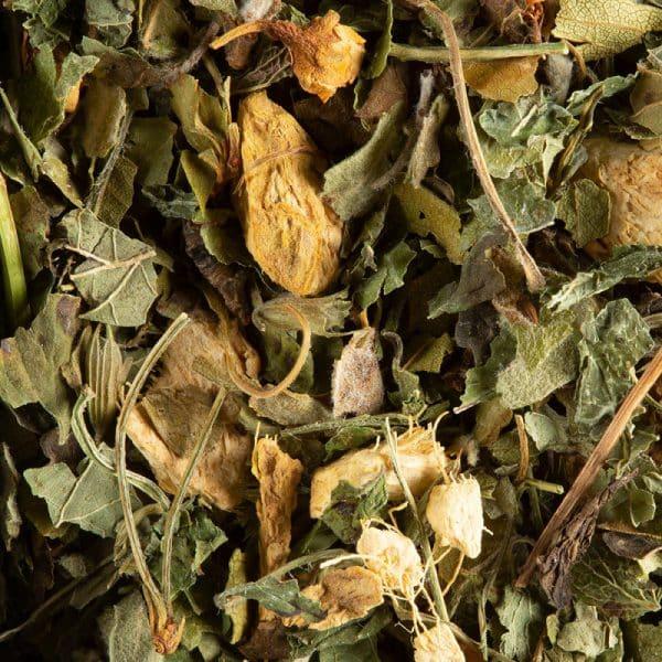tisane magic ginger
